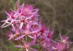 FLOWER SPIRITS & ESSENCES